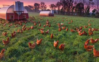 Бизнес в сельском хозяйстве