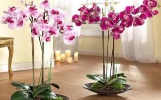 Дизайн интерьера растениями