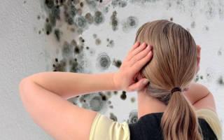 Удаление плесени со стен в квартире самостоятельно