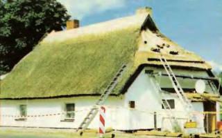 Камыш на крыше сканворд 6 букв